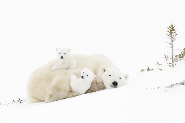 Tan chảy với những bức ảnh gia đình đáng yêu của các loài động vật - Ảnh 6.