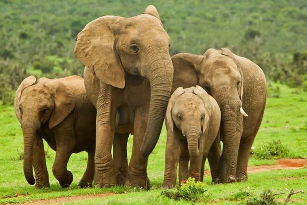 Tan chảy với những bức ảnh gia đình đáng yêu của các loài động vật - Ảnh 7.