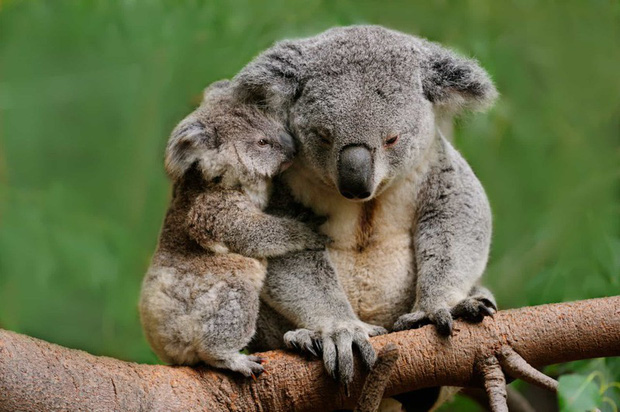 Tan chảy với những bức ảnh gia đình đáng yêu của các loài động vật - Ảnh 8.