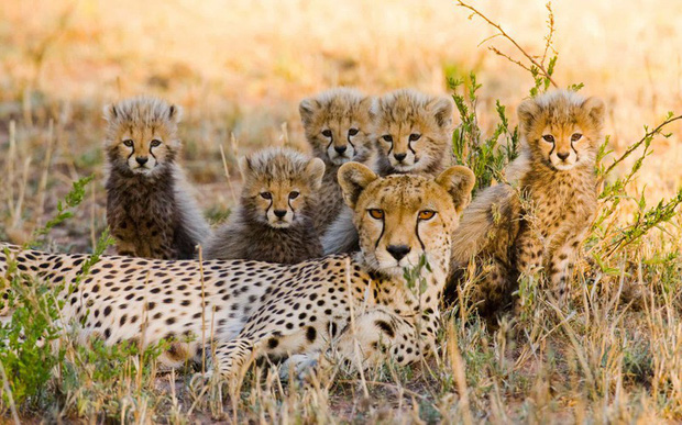 Tan chảy với những bức ảnh gia đình đáng yêu của các loài động vật - Ảnh 9.