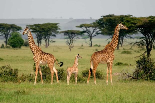 Tan chảy với những bức ảnh gia đình đáng yêu của các loài động vật - Ảnh 10.