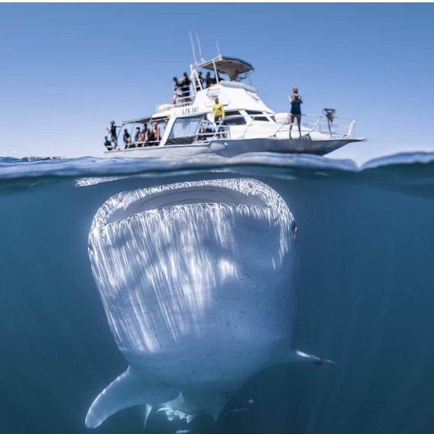Justin Bieber bảo con cá to bằng cả cái du thuyền này là có thật, nhưng đằng sau nó còn một cú twist mà không nhiều người nhận ra - Ảnh 2.