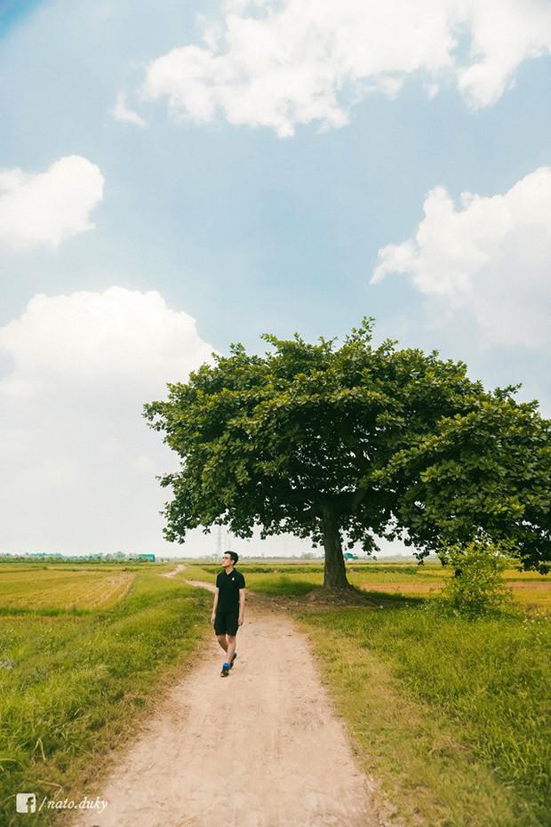 Đã xác định được toạ độ của cây cô đơn siêu hot trong MV mới của Đức Phúc, đến đây chụp hình thì tình và thơ hết chỗ nói luôn! - Ảnh 6.