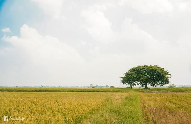Đã xác định được toạ độ của cây cô đơn siêu hot trong MV mới của Đức Phúc, đến đây chụp hình thì tình và thơ hết chỗ nói luôn! - Ảnh 4.