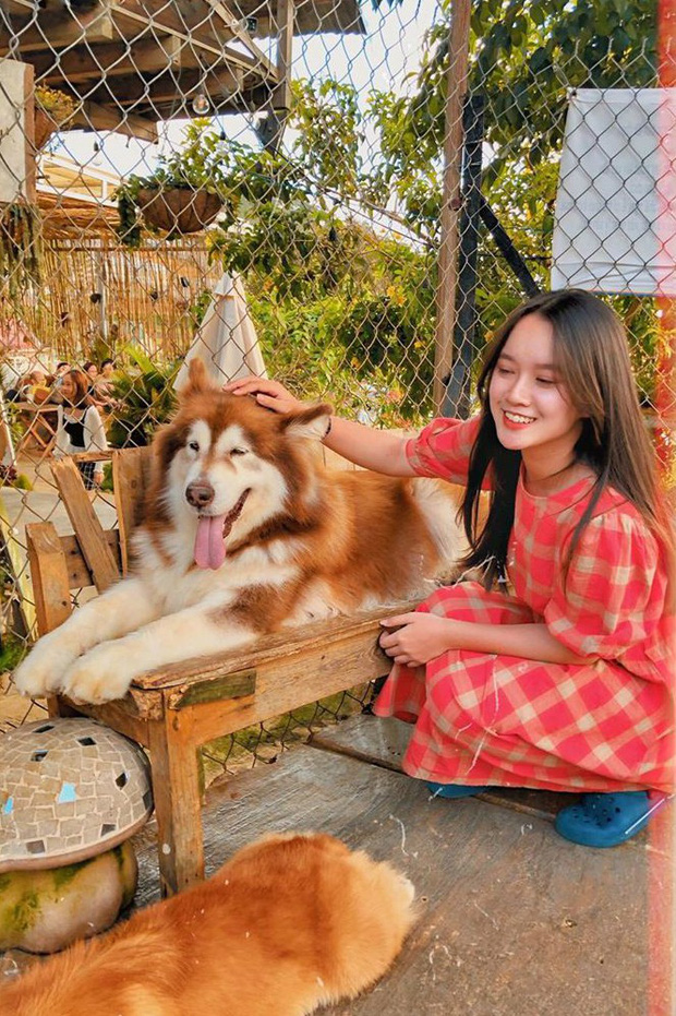 """Going to Da Lat to become a """"lotus"""" at 5 super cute dog cafes, now taking pictures to check-in with the new boss is a hot trend!  - Photo 1."""