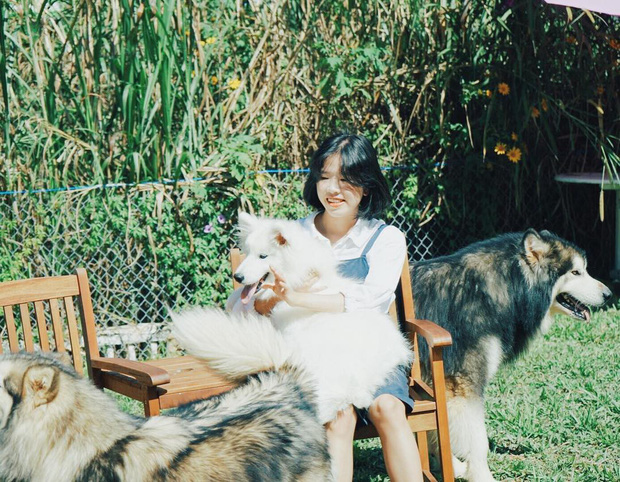 """Going to Da Lat to become a """"lotus"""" at 5 super cute dog cafes, now taking pictures to check-in with the new boss is a hot trend!  - Photo 22."""