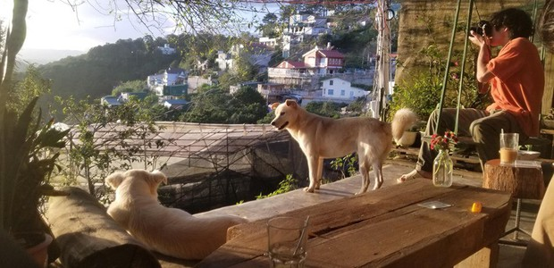 """Going to Da Lat to become a """"lotus"""" at 5 super cute dog cafes, now taking pictures to check-in with the new boss is a hot trend!  - Photo 28."""