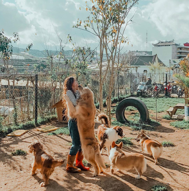 """Going to Da Lat to become a """"lotus"""" at 5 super cute dog cafes, now taking pictures to check-in with the new boss is a hot trend!  - Photo 2."""