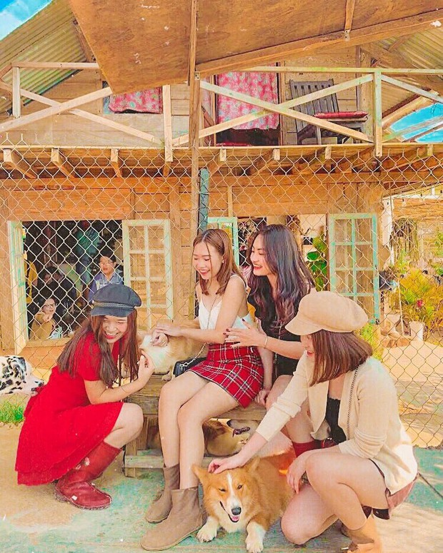 """Going to Da Lat to become a """"lotus"""" at 5 super cute dog cafes, now taking pictures to check-in with the new boss is a hot trend!  - Photo 6."""