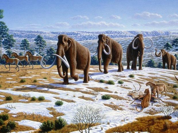 Tiết lộ mới: Cá thể voi ma mút cuối cùng chỉ chết cách đây 4.000 năm - Ảnh 1.