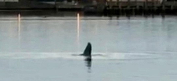 Cá voi lưng gù bơi lạc tới sông Thames đã chết - Ảnh 2.