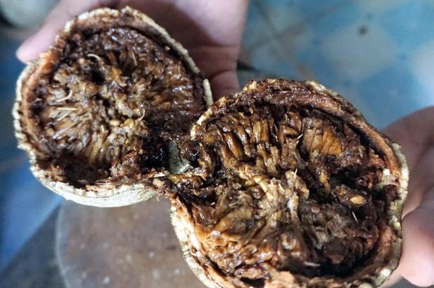 Xấu từ ngoài vào trong nhưng ít ai biết trái quách Trà Vinh là đặc sản không phải ai cũng từng được ăn - Ảnh 1.