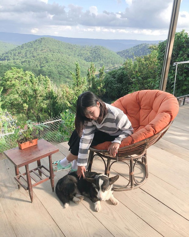"""Going to Da Lat to become a """"lotus"""" at 5 super cute dog cafes, now taking pictures to check-in with the new boss is a hot trend!  - Picture 12."""