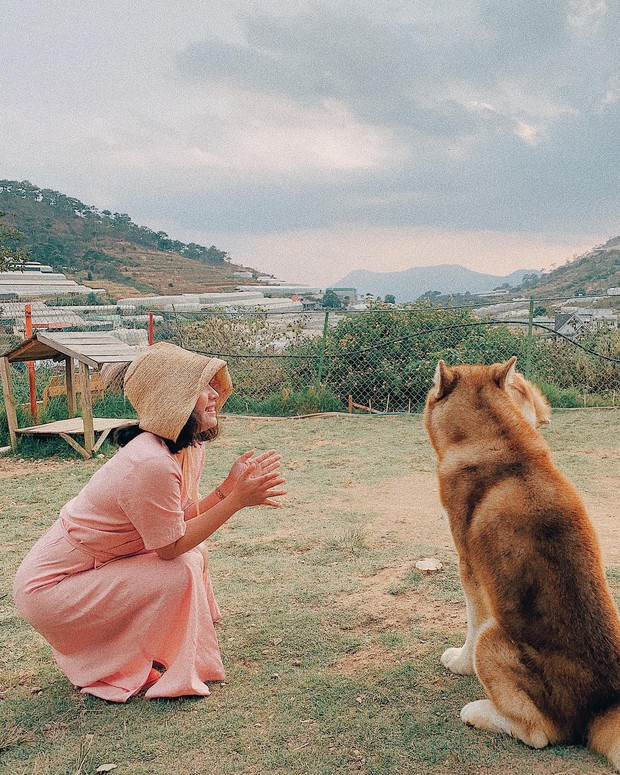 """Going to Da Lat to become a """"lotus"""" at 5 super cute dog cafes, now taking pictures to check-in with the new boss is a hot trend!  - Photo 4."""