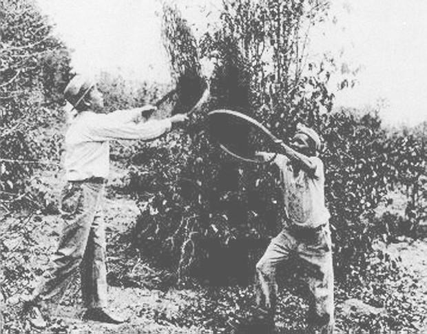 Chuyện người Nhật di cư đến Brazil: Từng sống khốn khổ và bị đối xử không khác nô lệ nhưng mạnh mẽ vươn lên tìm chỗ đứng nơi đất khách - Ảnh 2.