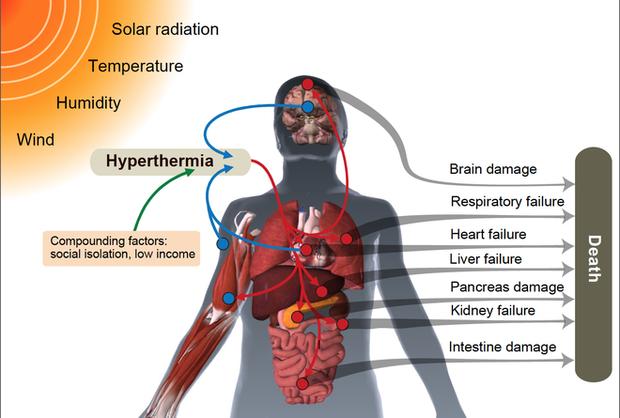 Khi nhiệt độ ngoài trời chạm ngưỡng 50 độ C, cơ thể con người sẽ sụp đổ như thế nào? - Ảnh 4.