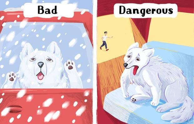 8 sai lầm cực kỳ nghiêm trọng rất nhiều người nuôi thú cưng đang mắc phải mà không hề hay biết - Ảnh 7.