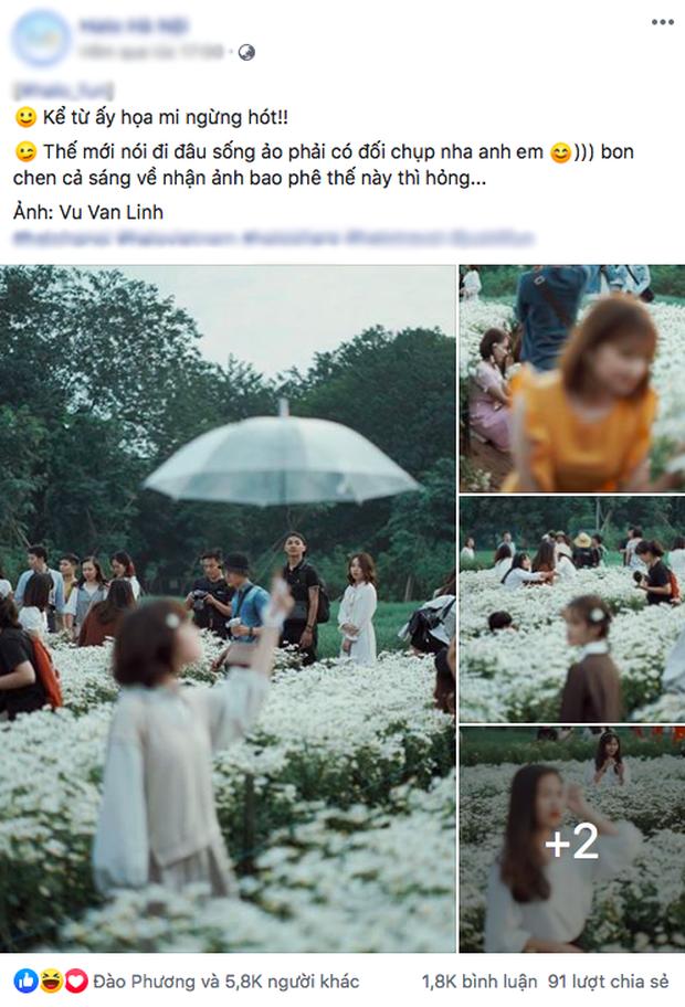 Khung cảnh đông nghịt trong vườn cúc hoạ mi đang gây bão MXH: Khi bạn muốn bắt trend nhưng trend... không bắt bạn!  - Ảnh 1.