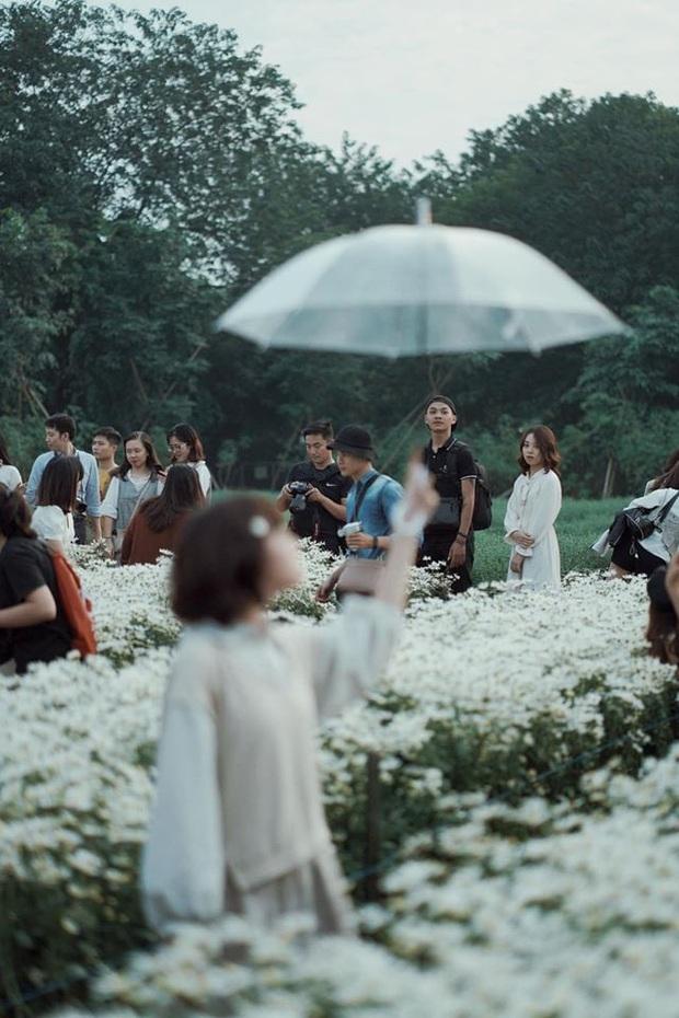 Khung cảnh đông nghịt trong vườn cúc hoạ mi đang gây bão MXH: Khi bạn muốn bắt trend nhưng trend... không bắt bạn!  - Ảnh 5.