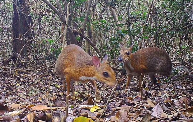 Phát hiện động vật tưởng tuyệt chủng ở Việt Nam sau 30 năm - Ảnh 1.