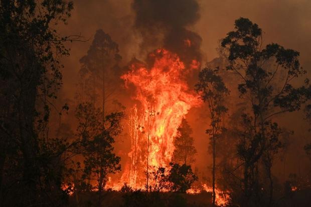 Cháy rừng Australia khủng khiếp hơn, 6 triệu người trong tình trạng khẩn cấp - Ảnh 1.