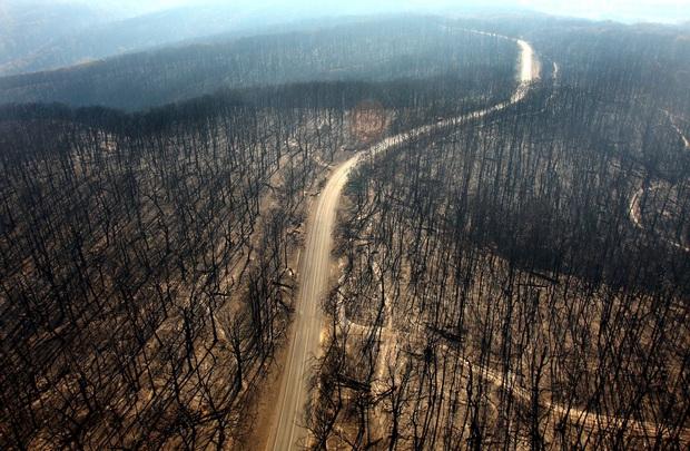 Cháy rừng Australia khủng khiếp hơn, 6 triệu người trong tình trạng khẩn cấp - Ảnh 2.