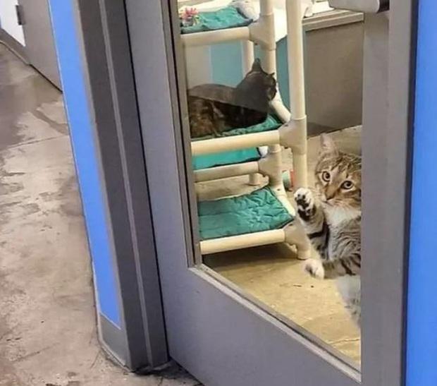 Chú mèo bị biệt giam vì hở ra là dắt anh em động vật cơ nhỡ trốn trại - Ảnh 3.
