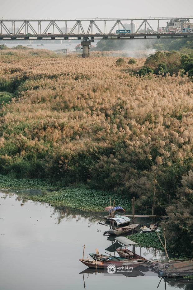 Hà Nội vào mùa cỏ lau đẹp ngút mắt: lên ảnh đẹp thế này thì cần gì sang tận Hàn Quốc chụp cỏ hồng? - Ảnh 11.