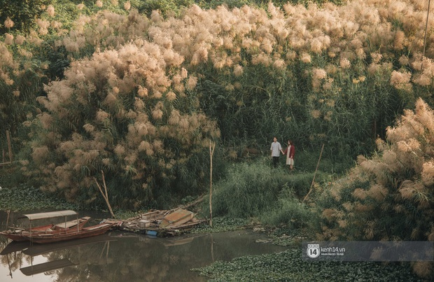 Hà Nội vào mùa cỏ lau đẹp ngút mắt: lên ảnh đẹp thế này thì cần gì sang tận Hàn Quốc chụp cỏ hồng? - Ảnh 10.