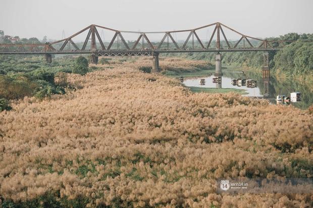 Hà Nội vào mùa cỏ lau đẹp ngút mắt: lên ảnh đẹp thế này thì cần gì sang tận Hàn Quốc chụp cỏ hồng? - Ảnh 2.