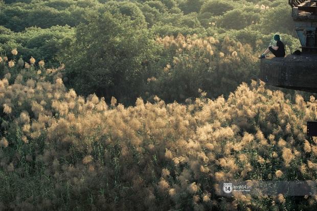 Hà Nội vào mùa cỏ lau đẹp ngút mắt: lên ảnh đẹp thế này thì cần gì sang tận Hàn Quốc chụp cỏ hồng? - Ảnh 7.
