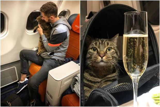 Lén lút mang hoàng thượng mèo thừa cân lên máy bay, chàng trai nhận án phạt cực nặng từ hãng hàng không - Ảnh 1.