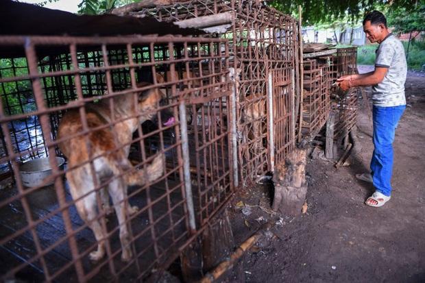 Ngành kinh doanh thịt chó ở Campuchia: Tàn bạo, đầy tội lỗi và những hệ lụy sức khỏe đáng báo động - Ảnh 4.