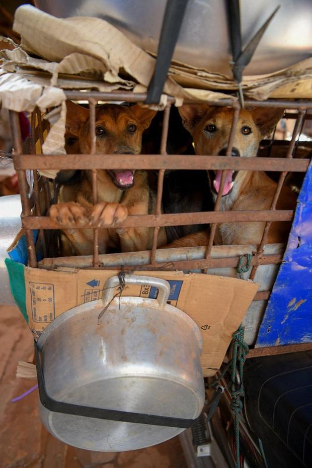 Ngành kinh doanh thịt chó ở Campuchia: Tàn bạo, đầy tội lỗi và những hệ lụy sức khỏe đáng báo động - Ảnh 3.