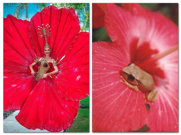 Đối thủ của Hoàng Thùy chọn ngay trang phục hoa dâm bụt đỏ thơm tại Miss Universe - Ảnh 8.