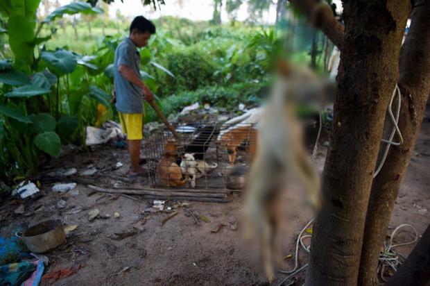 Ngành kinh doanh thịt chó ở Campuchia: Tàn bạo, đầy tội lỗi và những hệ lụy sức khỏe đáng báo động - Ảnh 5.