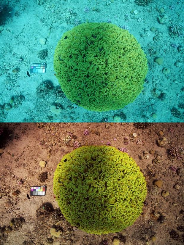 """Choáng với phiên bản Photoshop """"mini"""": 1 giây hô biến hết sạch sông biển, ảnh chụp y như thế giới khác - Ảnh 1."""