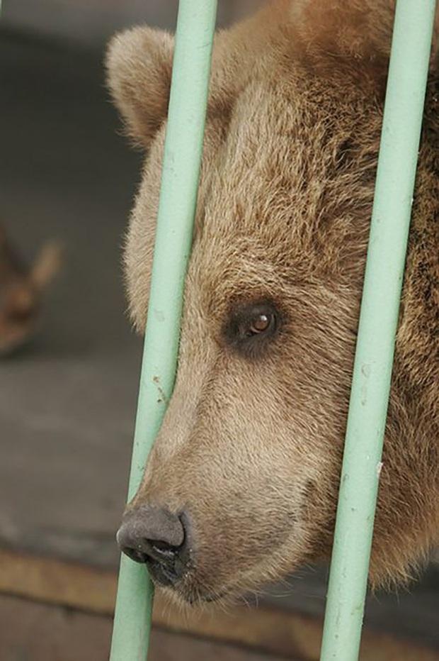 Gấu nâu Katya - nữ tù nhân kì lạ nhất thế giới được ân xá sau khi thụ án 15 năm tù trong một nhà giam toàn tội phạm nguy hiểm - Ảnh 3.