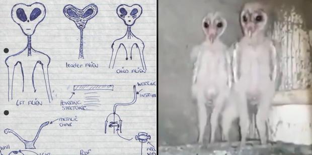 Dân mạng đang hoảng sợ vì đoạn video về người ngoài hành tinh, nhưng hóa ra là một sinh vật quen thuộc đến bất ngờ - Ảnh 4.