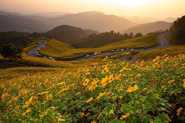 Đồi hoa dã quỳ vàng rực chẳng biết là mơ hay thật đang gây sốt toàn Thái Lan, xem ảnh ngoài đời chỉ biết ngỡ ngàng vì đẹp! - Ảnh 14.