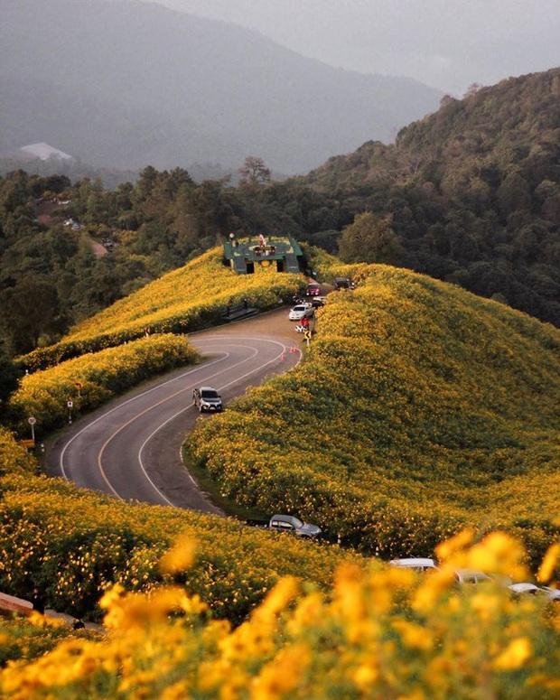 Đồi hoa dã quỳ vàng rực chẳng biết là mơ hay thật đang gây sốt toàn Thái Lan, xem ảnh ngoài đời chỉ biết ngỡ ngàng vì đẹp! - Ảnh 7.