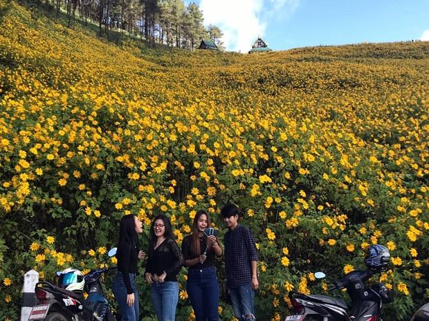 Đồi hoa dã quỳ vàng rực chẳng biết là mơ hay thật đang gây sốt toàn Thái Lan, xem ảnh ngoài đời chỉ biết ngỡ ngàng vì đẹp! - Ảnh 4.