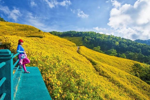 Đồi hoa dã quỳ vàng rực chẳng biết là mơ hay thật đang gây sốt toàn Thái Lan, xem ảnh ngoài đời chỉ biết ngỡ ngàng vì đẹp! - Ảnh 9.