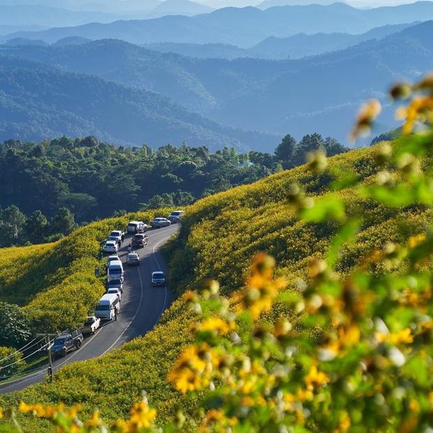 Đồi hoa dã quỳ vàng rực chẳng biết là mơ hay thật đang gây sốt toàn Thái Lan, xem ảnh ngoài đời chỉ biết ngỡ ngàng vì đẹp! - Ảnh 28.