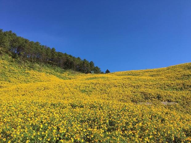 Đồi hoa dã quỳ vàng rực chẳng biết là mơ hay thật đang gây sốt toàn Thái Lan, xem ảnh ngoài đời chỉ biết ngỡ ngàng vì đẹp! - Ảnh 17.