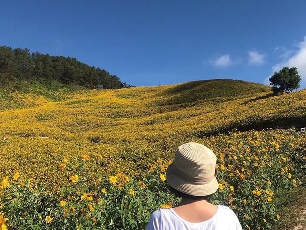 Đồi hoa dã quỳ vàng rực chẳng biết là mơ hay thật đang gây sốt toàn Thái Lan, xem ảnh ngoài đời chỉ biết ngỡ ngàng vì đẹp! - Ảnh 11.