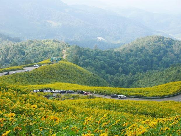 Đồi hoa dã quỳ vàng rực chẳng biết là mơ hay thật đang gây sốt toàn Thái Lan, xem ảnh ngoài đời chỉ biết ngỡ ngàng vì đẹp! - Ảnh 25.