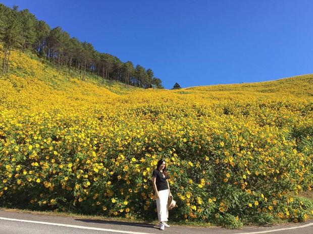 Đồi hoa dã quỳ vàng rực chẳng biết là mơ hay thật đang gây sốt toàn Thái Lan, xem ảnh ngoài đời chỉ biết ngỡ ngàng vì đẹp! - Ảnh 20.