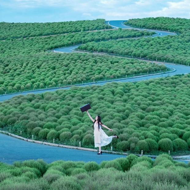 Đẹp nhất Nhật Bản mùa này chính là đồi cỏ Kochia đỏ rực, du khách đua nhau check-in đông không thấy lối đi - Ảnh 10.