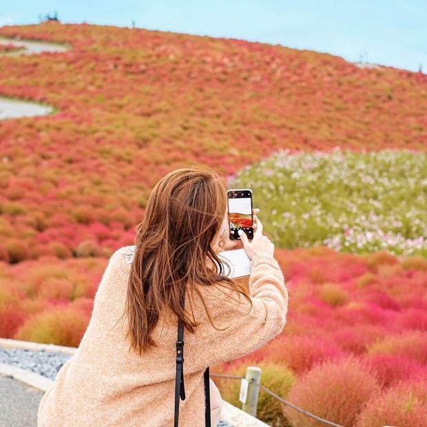 Đẹp nhất Nhật Bản mùa này chính là đồi cỏ Kochia đỏ rực, du khách đua nhau check-in đông không thấy lối đi - Ảnh 24.